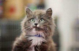 Імена для котів