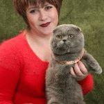 Розплідник Шотландських висловухих котів «Golden Rain»