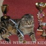 Розплідник Шотландських висловухих котів «WELL-BRED KIDDY»