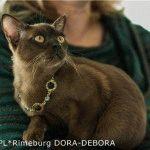 Розплідник бурманських котів «Arta Sur»
