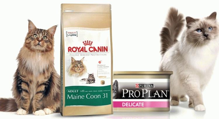 Який корм для котів кращий