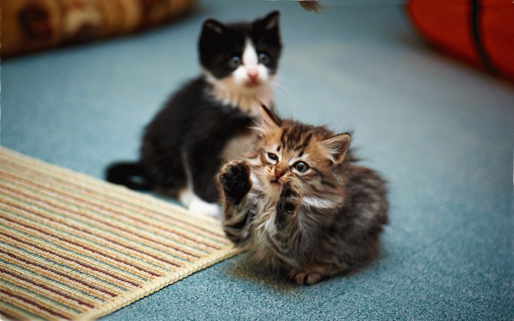 Анекдоти про котів і кішок