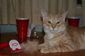 Догляд за шерстю кота