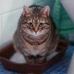 Понос у кота як та чим лікувати