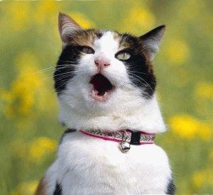 Смішні анекдоти про котів