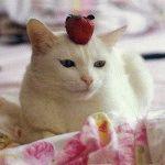 Біла кішка фото