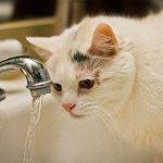 Біла кішка фото 2