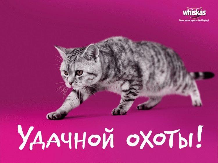 Кіт з реклами Віскас
