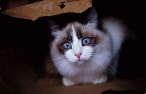 Алергія у котів