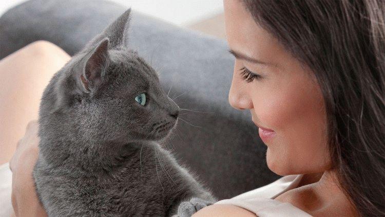 Порода кішки з реклами Шеба