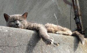 Заспокійливе для котів