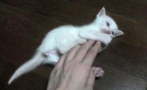 Як відучити котеня кусатися