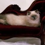 Безпечна перетримка-як знайти тимчасовий дім для кота